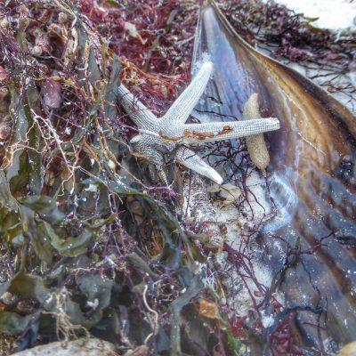 Sea life on Marco Island